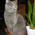 CEM chats perdus trouvés Charlotte
