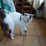 CEM chats perdus trouvés Hugo