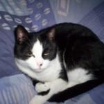 CEM chats perdus trouvés Raoul