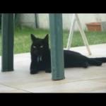 CEM chats perdus trouvés Lilo