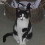CEM chats perdus trouvés Gédéon