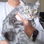 CEM chats perdus trouvés Grigri