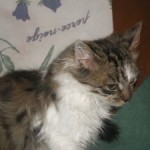 CEM chat adoption Gavroche