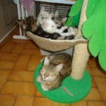 CEM chat adoption Gabs et Galia