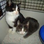 CEM chat adoption Igor et Artus