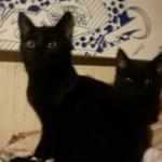 CEM chats perdus trouvés Loca