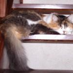 CEM chats perdus trouvés Noutisis