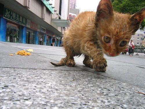chat tunisie sans inscription Angoulême