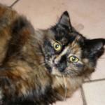 CEM chats perdus trouvés Geisha