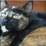 CEM chats perdus trouvés Hélène