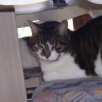 CEM chats perdus trouvés Vagabond