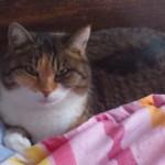 CEM chats perdus trouvés Fifi