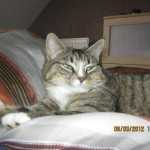 CEM chats perdus trouvés Miya