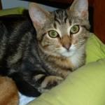 CEM chats perdus trouvés Helton