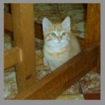 CEM chats perdus trouvés Hyppolite ( Néo )