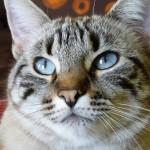 CEM chats perdus trouvés Taiga