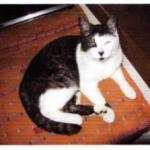 CEM chats perdus trouvés Mitsou