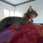 CEM chats perdus trouvés Chatouille