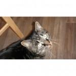 CEM chats perdus trouvés Ivan,  Minou