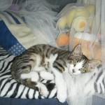 CEM chats perdus trouvés P'tit Kawaii