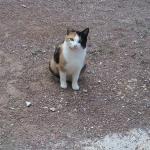 CEM chats perdus trouvés Gamine