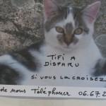 CEM chats perdus trouvés Tifi