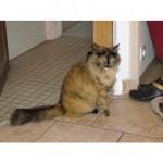 CEM chats perdus trouvés Mimine