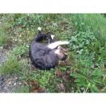 CEM chat trouvé --Trouvé