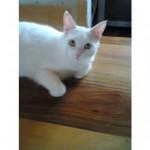 CEM chats perdus trouvés Natou