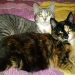 CEM chat adoption Lola et Lilou
