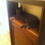 CEM chats perdus trouvés Chatte perdue