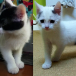 CEM chat adoption Syrius et Scotty