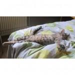 CEM chats perdus trouvés Chatte