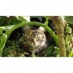 CEM chats perdus trouvés Minoute