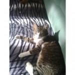 CEM chats perdus trouvés Aria