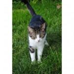 CEM chats perdus trouvés Rosie