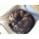 CEM chats perdus trouvés Caramel
