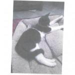CEM chats perdus trouvés Chaussette