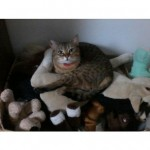 CEM chats perdus trouvés Faya