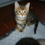 CEM chat adoption Javotte