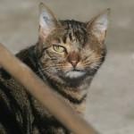 CEM chats perdus trouvés Arthur
