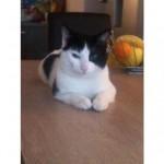 CEM chats perdus trouvés Félix
