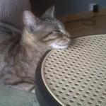 CEM chats perdus trouvés Fidjy