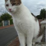 CEM chats perdus trouvés Jackson