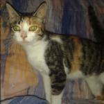 chat à adopter Joye