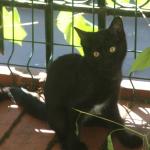 chat à adopter Briseis