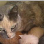 CEM chats perdus trouvés Juliette