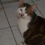 CEM chats perdus trouvés Zéphir