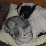 CEM chats perdus trouvés Shalom