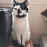CEM chats perdus trouvés Sissi